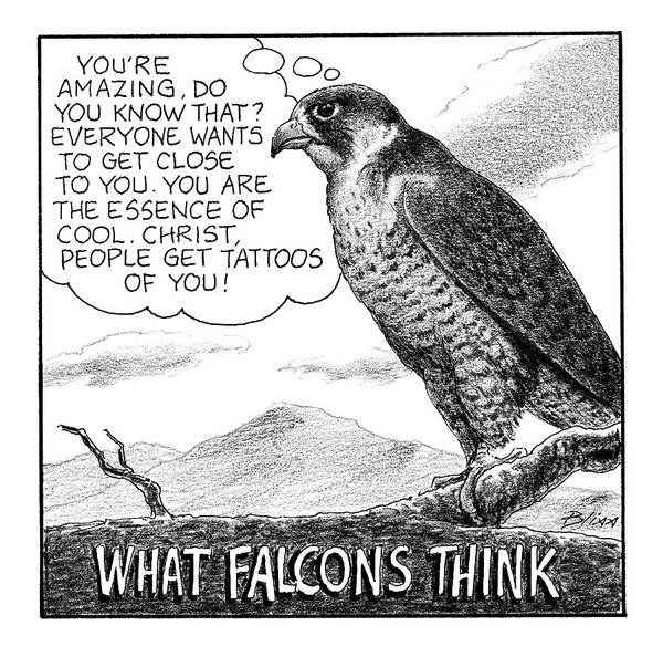 8 Drawing - What Falcons Think by Harry Bliss