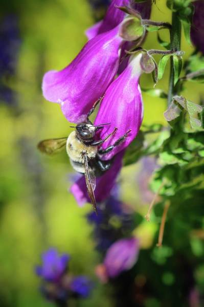 Photograph - What's The Buzz? by Shannon Kelly