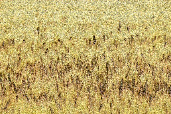 Wall Art - Digital Art - Wheat, Abstract #1 by Dimitris Sivyllis