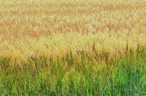 Wall Art - Digital Art - Wheat, Abstract #2 by Dimitris Sivyllis