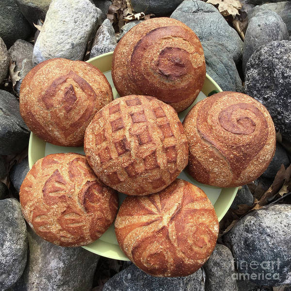 Photograph - Six Wheat And Rye Sourdough Boules 1 by Amy E Fraser