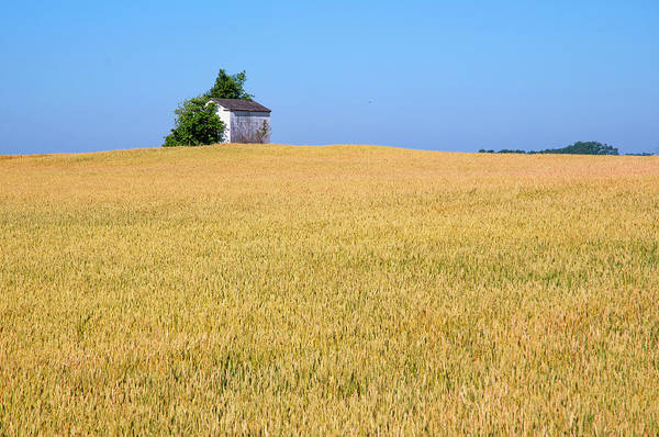 Photograph - Wheat And Shed by Steve Stuller