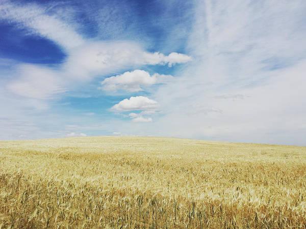 Photograph - Wheat Field, Castiglia E Leon, Spain by Lucapierro