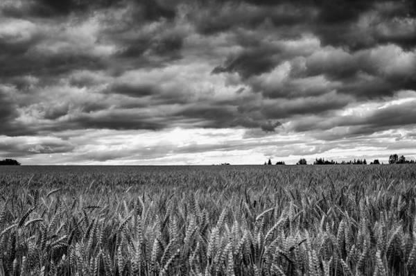 Photograph - Wheat Storm by Steven Clark