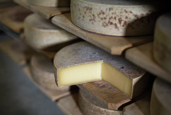 Switzerland Photograph - Wheels Of Swiss Mountain Cheese by Adrian Studer