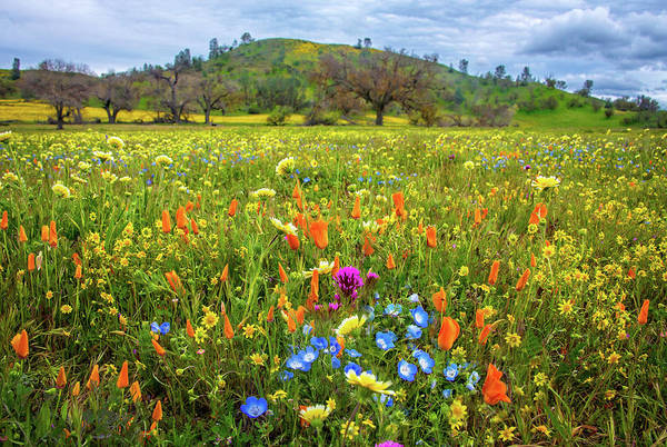 Photograph - When Heaven And Nature Sing - Superbloom 2019 by Lynn Bauer