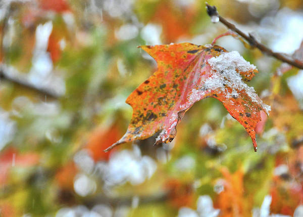 Photograph - When Seasons Collide by JAMART Photography