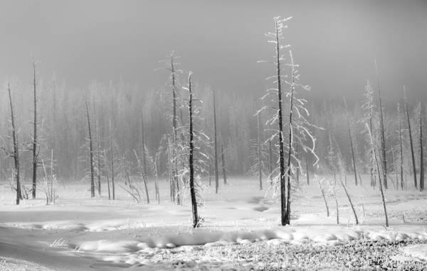 Photograph - When Silence Reigns by Karen Wiles