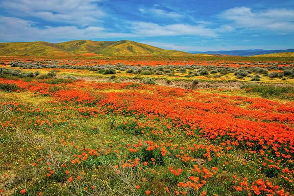 Photograph - When The Desert Floor Blooms - Superbloom 2019 by Lynn Bauer