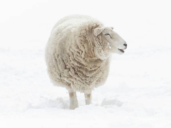 Farm Animals Photograph - Where Is That Barn by Mike Dawson
