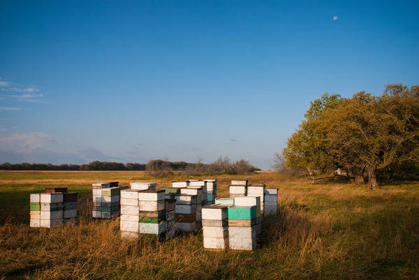Photograph - Where The Bees Live by Carl Young