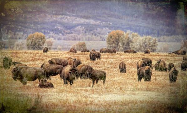 Wall Art - Photograph - Where The Buffalo Roam by Donna Kennedy