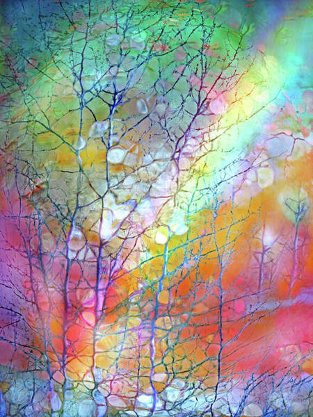 Digital Art - Where The Quiet Emigration Of Winter Ends And The Rainbows Of Spring Begin by Tara Turner