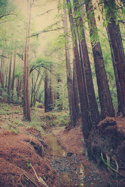 Redwoods Photograph - Wherever You May Roam by Laurie Search