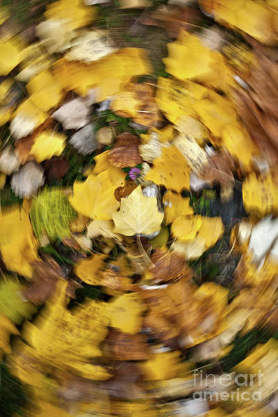 Photograph - Whirlpool Of Autumn by Awais Yaqub