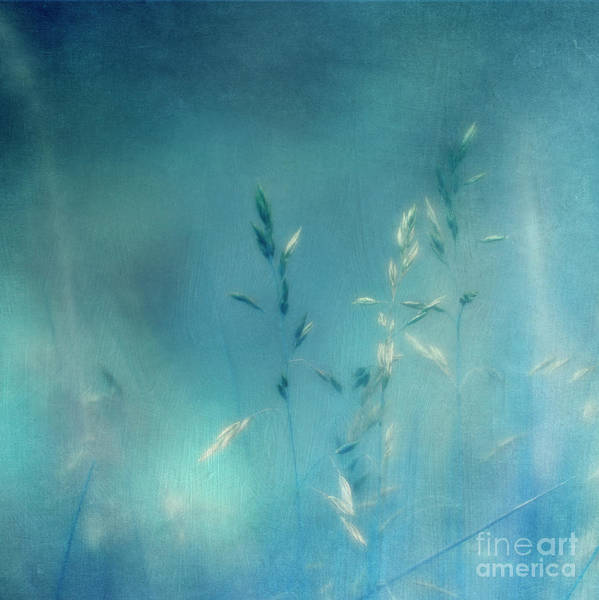 Wall Art - Photograph - Whispering Grass 2 by Priska Wettstein