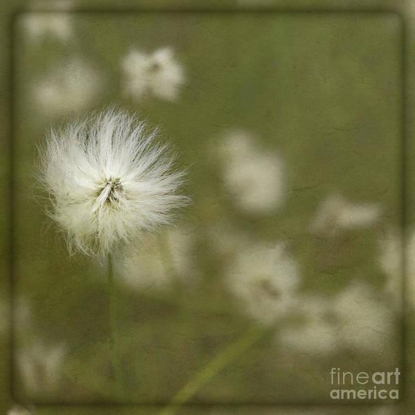 Digital Art - Whispers Of Nature by Liz Alderdice