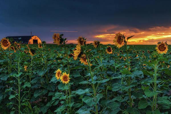 Photograph - Whispers Of Summer by John De Bord