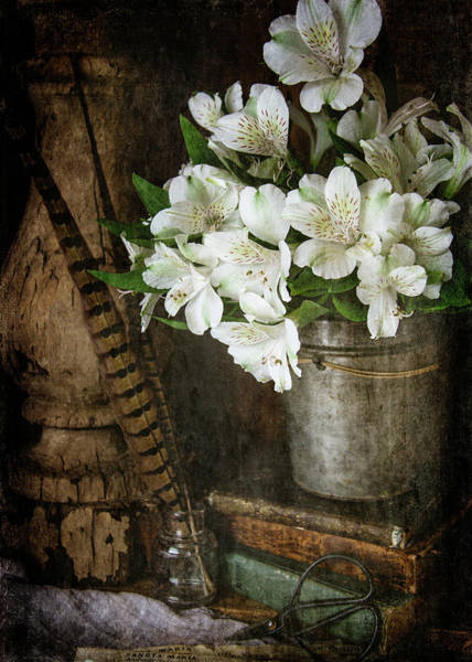 Alstroemeria Photograph - White Alstroemeria by Cindi Ressler
