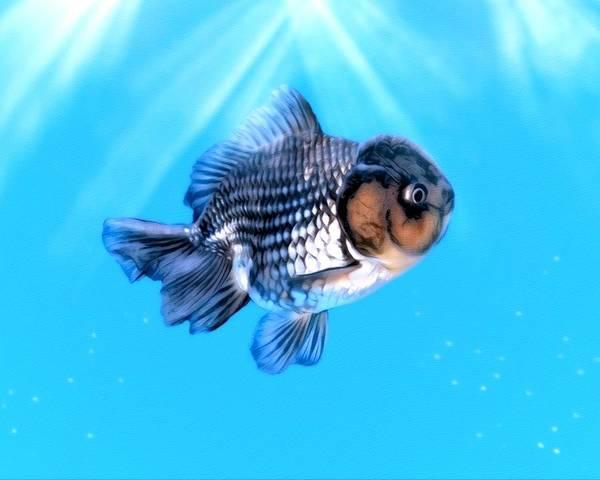 Digital Art - White And Black Goldfish  by Scott Wallace Digital Designs