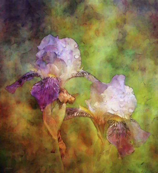 Photograph - White And Purple Irises 1423 Idp_2 by Steven Ward