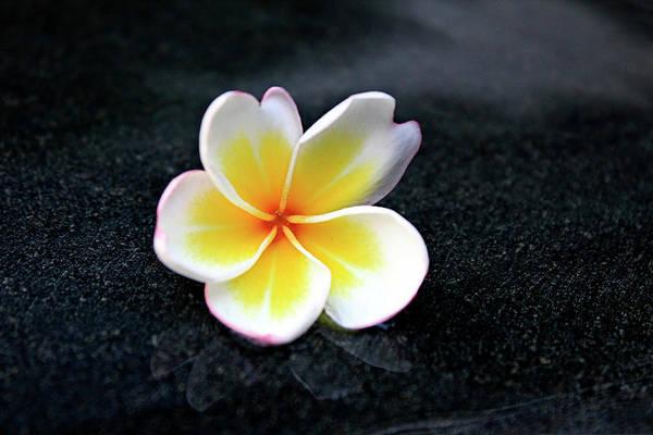Thailand Photograph - White And Yellow Plumeria by Magalie L'abbé