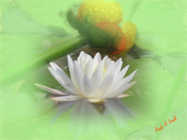 Digital Art - White And Yellow Water Lilies. by Rusty R Smith