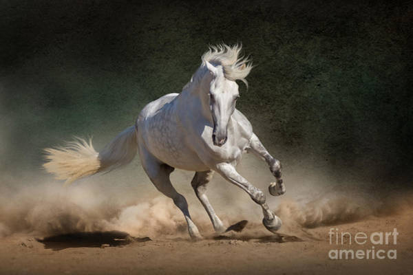 Andalusian Stallion Wall Art - Photograph - White Andalusian Horse In Desert Dust by Callipso