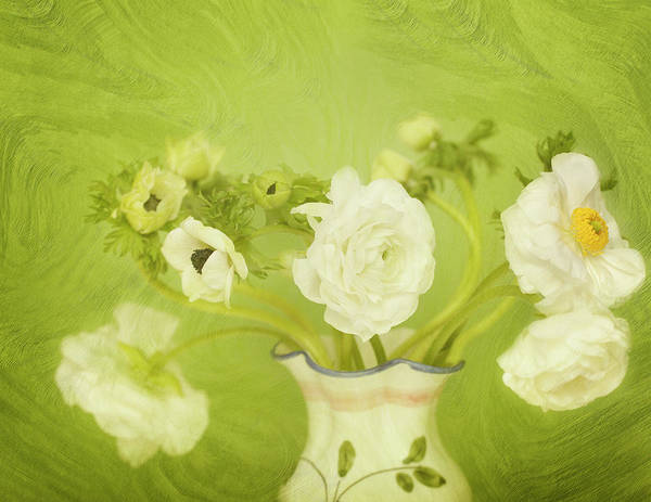 Stem Digital Art - White Anemonies And Ranunculus by Susangaryphotography