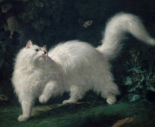 Wall Art - Painting - White Angora Cat Chasing A Butterfly, 1761 by Jean-Jacques Bachelier