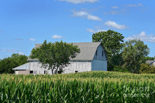 Wall Art - Photograph - White Barn In Corn Field by Catherine Sherman