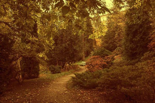 Photograph - White Bench In Secret Garden by Jenny Rainbow