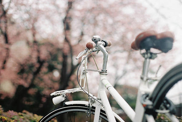 Rain Photograph - White Bike In Rain, Against Pink Cherry by Breeze.kaze