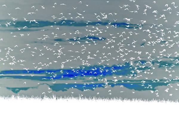Solarized Photograph - White Birdland by Philippe Sainte-laudy Photography