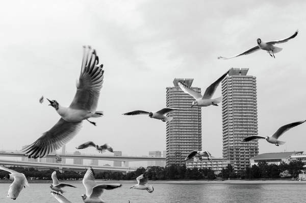 Photograph - White Birds In Flight by Bzause A Picture Is Worth A Thousand Words.
