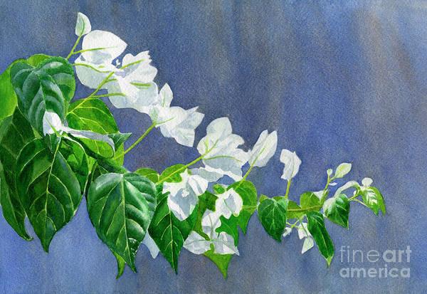 Bougainvillea Painting - White Bougainvillea by Sharon Freeman