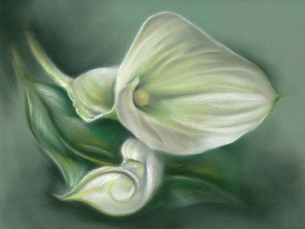 Pastel - White Callas With Leaf by MM Anderson