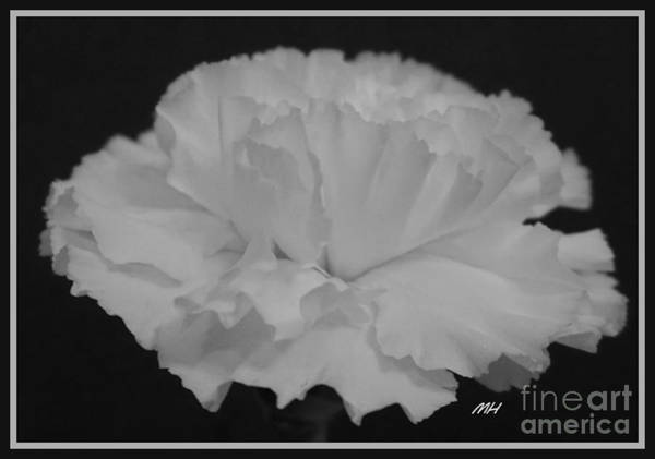 Wall Art - Photograph - White Carnation by Marsha Heiken