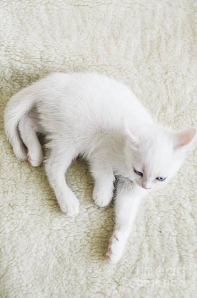 Wall Art - Photograph - White Cat by Jelena Jovanovic