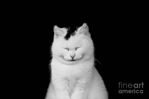 Wall Art - Photograph - White Cat Smiling by Masyle