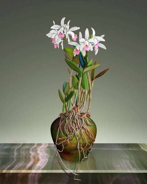 Painting - White Cattleya Orchids In Pot by David Arrigoni