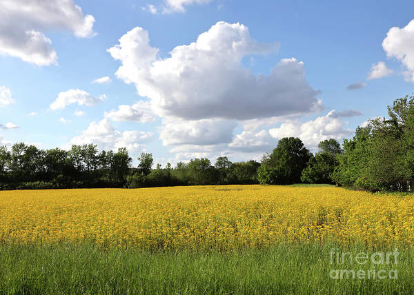 Photograph - White Clouds With Yellow Wildflowers by Paula Guttilla