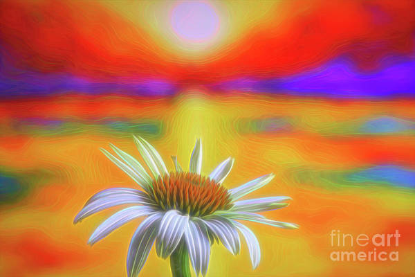Wall Art - Photograph - White Coneflower 2 by Veikko Suikkanen
