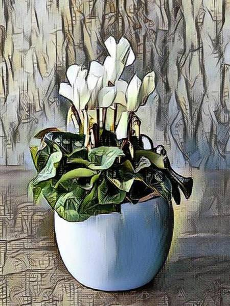 Painting - White Cyclamen by Portraits By NC
