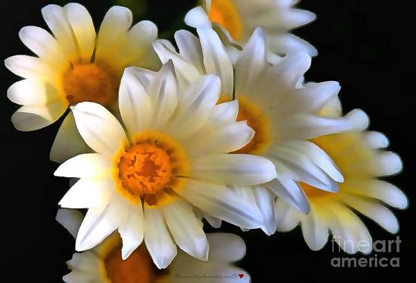 Painting - White Daisies In Acrylic Paint by Catherine Lott