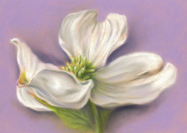 Pastel - White Dogwood On Purple by MM Anderson