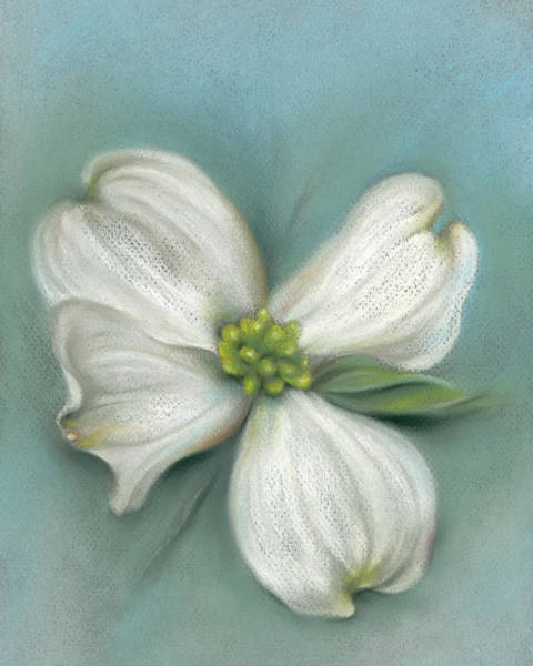 Pastel - White Dogwood With Leaf by MM Anderson