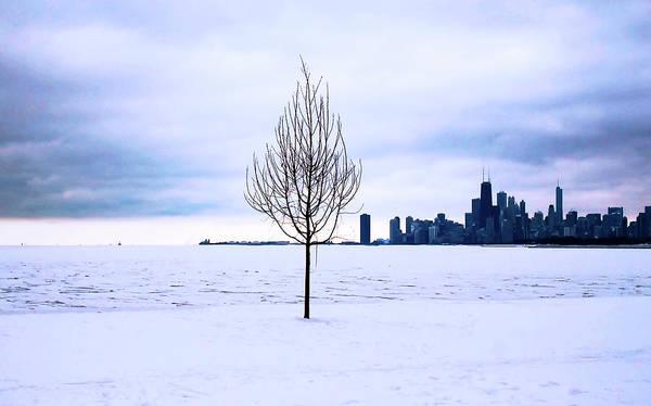 Photograph - White Dream by Milena Ilieva