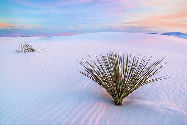 Photograph - White Dunes, White Sands National Monument by Francesco Emanuele Carucci