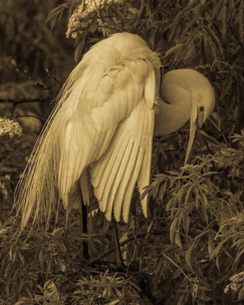 Photograph - White Egret In Tree by Dorothy Cunningham